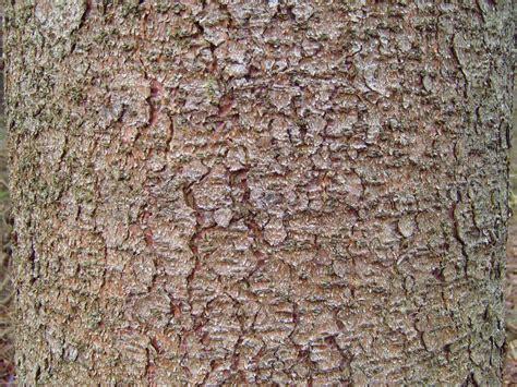 file pine tree bark texture jpg