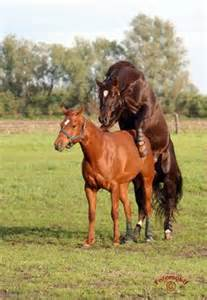 pferd decken tink stables