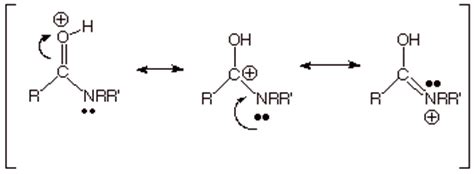 Protonated Carbonyl by Chapter 18 Functional Derivatives Of Carboxylic Acids