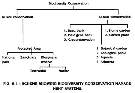 My Actions To Conserve Biodiversity Essay by Biodiversity Types Importance And Conservation Methods With Diagram