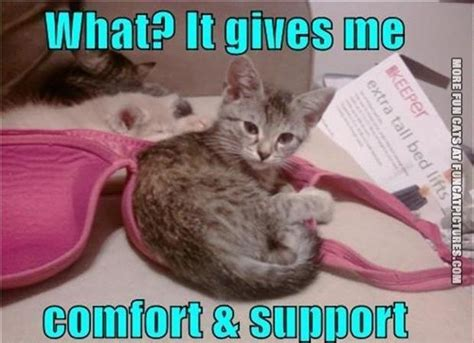 comfort cat kitten in a brah fun cat pictures