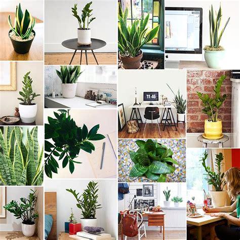 best low light office plants 535 best office plants desk mates images on pinterest