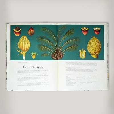 botanicum mini gift edition welcome to the museum books botanicum by kathy willis waterstones