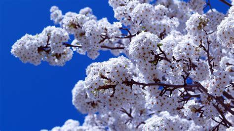 flower bloom bright branch plant hd wallpaper 1920 x 1080 85 wallpaper flower backgrounds for mobile and desktop