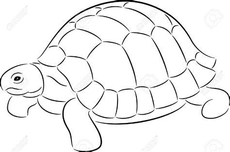 Turtle Outline by Line Tortoise Shell Pencil And In Color Line Tortoise Shell