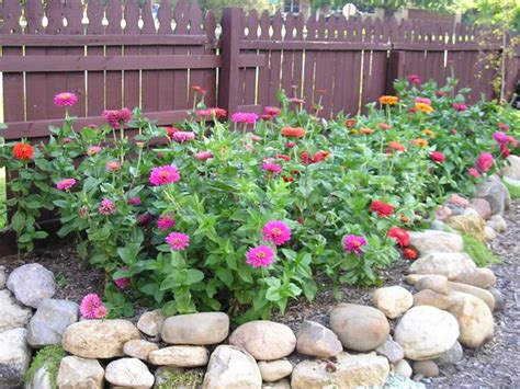 Zinnias Flower Garden My Absolute Most Favorite Zinnias 171 Oh What A