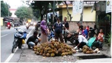 Durian Kupas Tuperware Medan durian medan bukan hanya berasal dari sidikalang dan