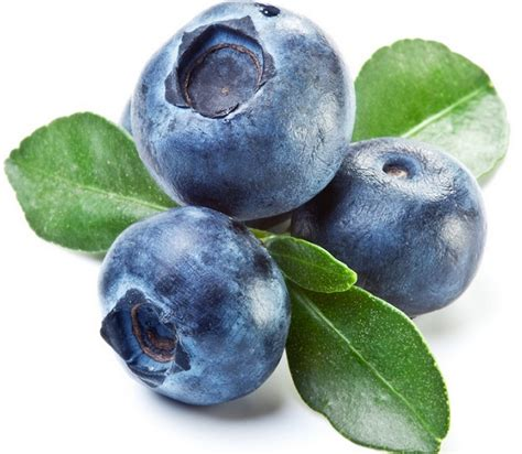 Jual Bibit Buah Blueberry uniknya penyemaian dan penanaman blueberry bibitbunga