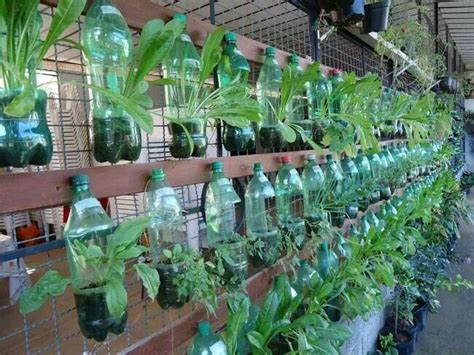 Bottle Gardening Ideas Soda Bottle Garden Garden Ideas Pinterest