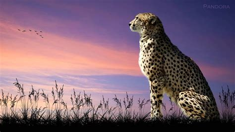 marcus warner africa beautiful inspirational uplifting
