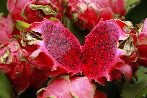Sale Buah Naga Merah diet sehat menggunakan buah naga merah prelo tips review spesifikasi barang preloved