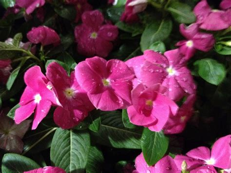 best summer flowers to plant bing images