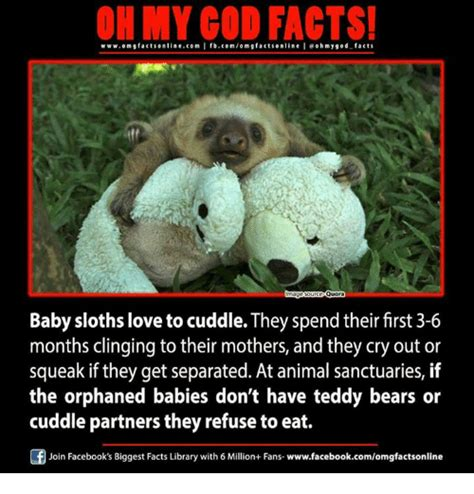 Baby Sloth Meme - 25 best memes about baby sloth baby sloth memes