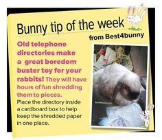 Must For The Week The House Bunny by 1000 Ideas About Rabbit Enclosure On Rabbit