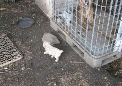 puppy mill definition puppy mills kansas city dogs our friends photo