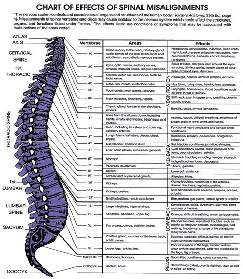 section of the spine that corresponds to the lower back lwchiropractic s blog wellness nutrition with chiropractic