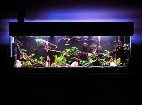 costruire vasca acquario come costruire un acquario tecniche fai da te