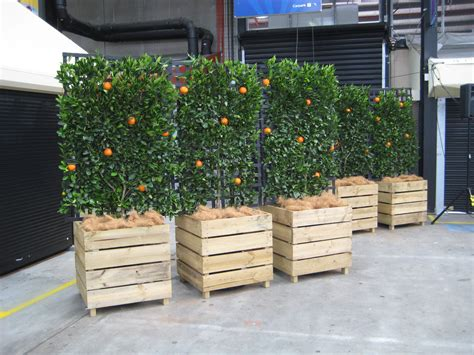 Large Wooden Planters For Trees by Botanical Events Plant Ornament Hire Home