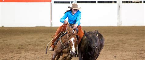 working  horse classic calgary stampede