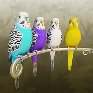 parakeet colors 3d model budgie 49 95 buy
