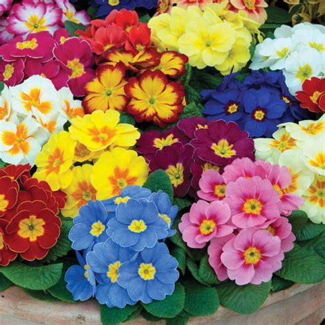 tipi di fiori tipi popolari di fiori un nome e una foto