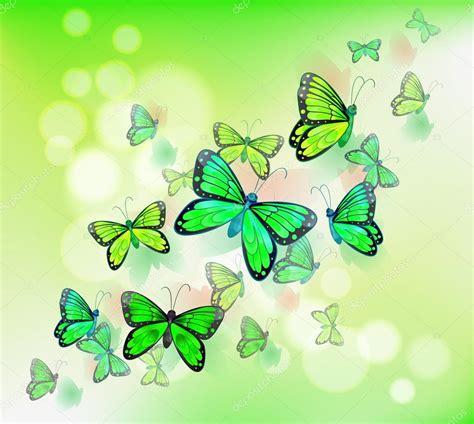 imagenes mariposas turquesas image gallery mariposas verdes