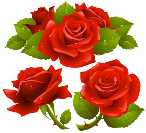 printable rose images free rose flower vector free vector in encapsulated