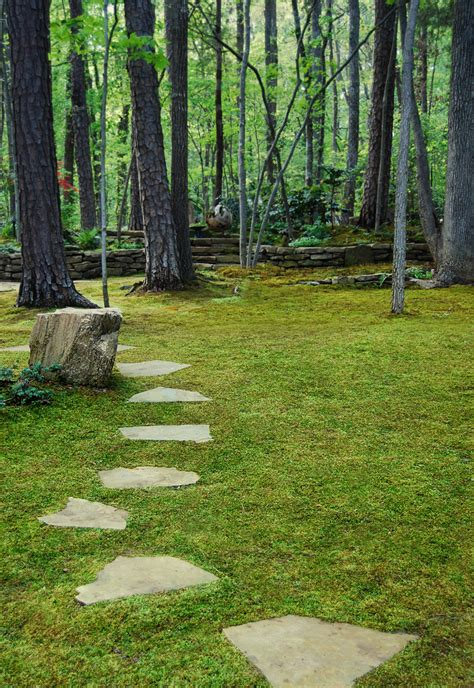 moss backyard the truth about moss dispelling moss myths moss and