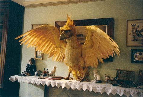 the phoenix and the the phoenix and the carpet images
