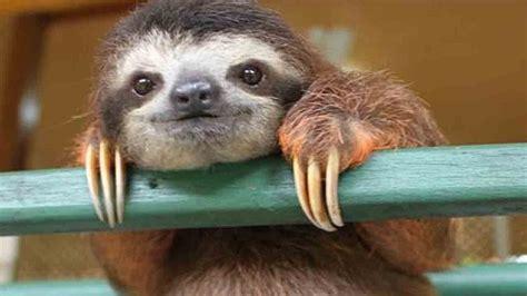 sunday sloth day tournament bridge base