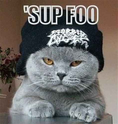 Sup Meme - sup foo lolcats internet memes juxtapost
