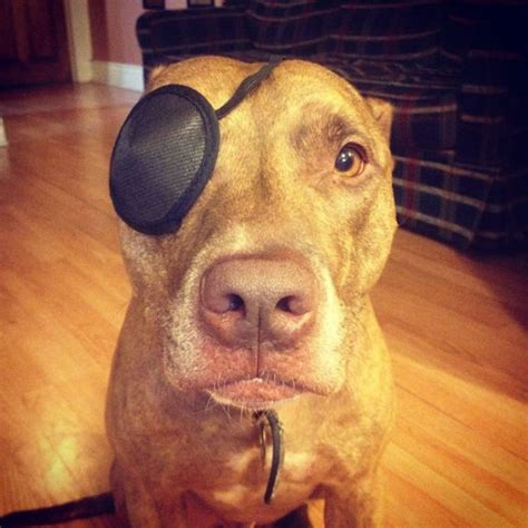 eye patch for dogs this is amazing at balancing stuff on his
