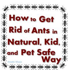 Safe Way To Get Rid Of Ants In Kitchen by 1000 Images About Herbal Remedies Health Ideas On