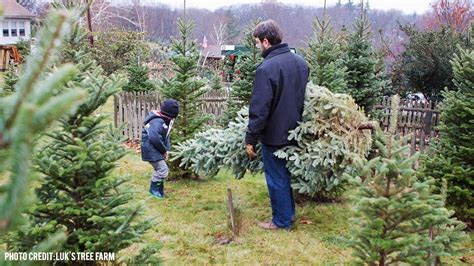 where to buy a christmas tree in central massachusetts