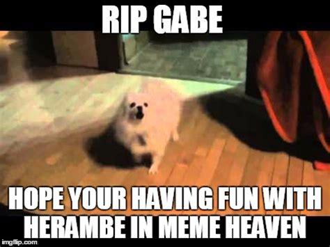 gabe the meme gabe the imgflip