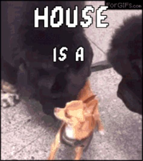 house gif house music gif find share on giphy
