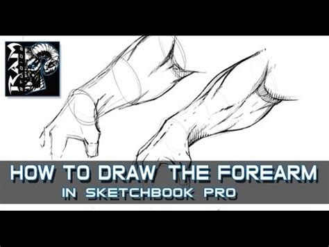 sketchbook pro how to draw how to draw forearm muscles in sketchbook pro narrated