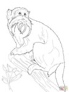 capuchin monkey coloring pages monkey and mowgli coloring pages capuchin monkey