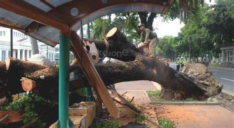 Jasa Tebang Pohon Jakarta Selatan jakarta gapey s