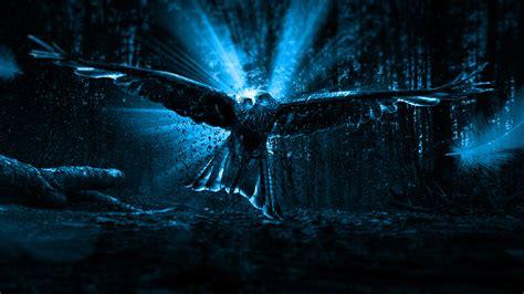 owl theme for google chrome free adler owl chromebook wallpaper ready for download