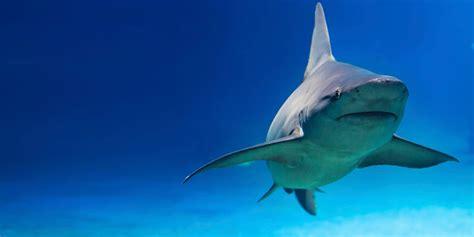 imagenes de tiburones wallpaper tibur 243 n en el oc 233 ano im 225 genes y fotos