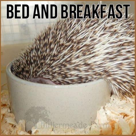breakfast in bed meme bed and breakfast hedgehog hedgie food millermeade