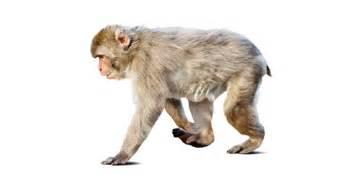 mammal characteristics flashcards  proprofs