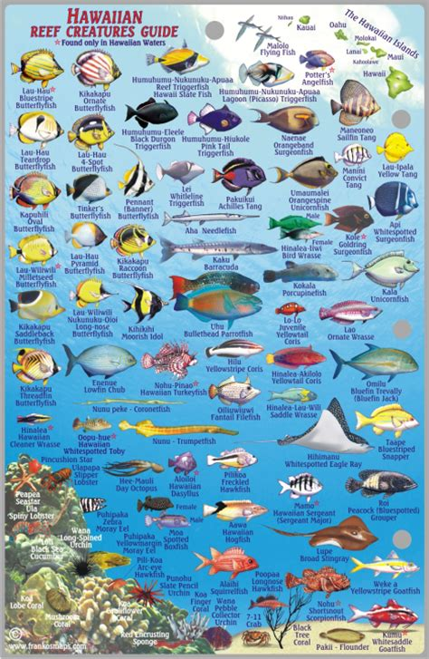 the ultimate guide to hawaiian reef fishes sea turtles oahu reef franko s fabulous maps of favorite places
