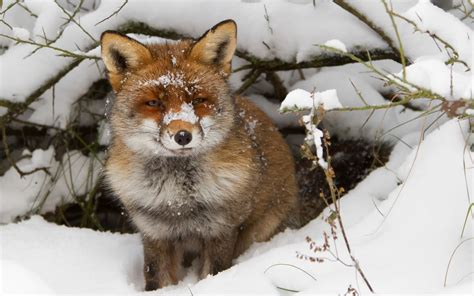 animals in the winter cute winter animal wallpaper wallpapersafari
