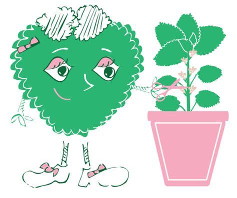 faire pousser des aromatiques avec les enfants est une