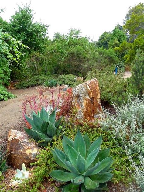 california native plants southern california and native plants on pinterest