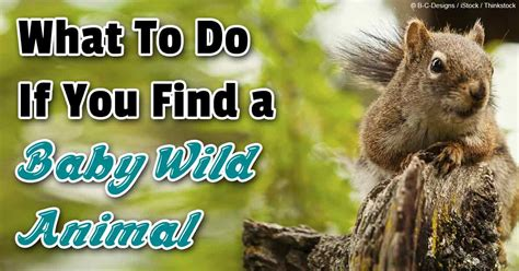 what to do if you find a baby animal in the wild