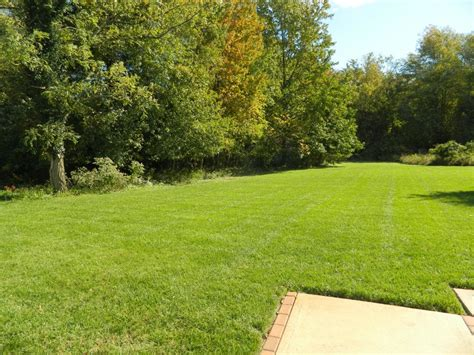 commercial maintenance home turf yard and home maintenance