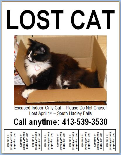 lost cat poster template flyer design templates lost pet research recovery